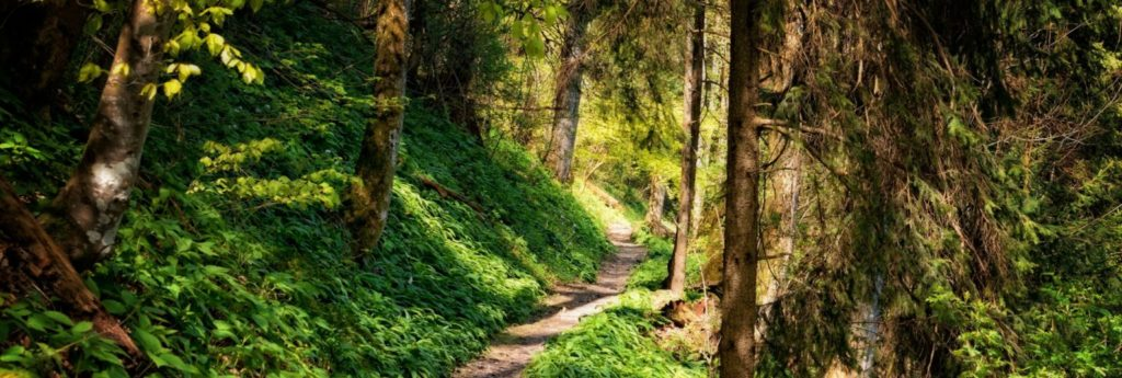 hike-1536×517